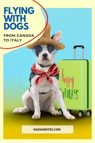 Flying with pets to Italy: important steps you need |